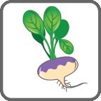 card_turnip